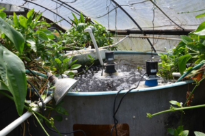 aquaponics supplies
